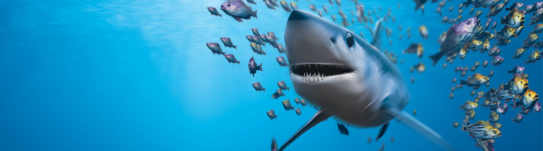 Shark swimming in a school of fish